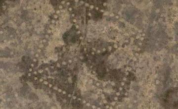 Археолог: снятые nasa геоглифы похожи на сарматские тамги